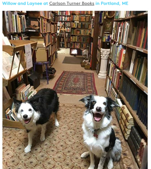 14 Adorable Bookstore Dogs to Brighten Your Day