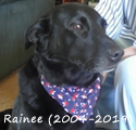 In Loving Memory: Rainee (2004-2019)