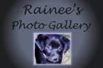 Rainee's Photo Gallery